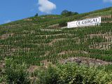 Serious hills for Serious wines : Côte Rôtie and Condrieu