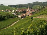 Domaine Albert Boxler Rieslings Grands Crus 2006-7-8-9