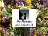 VDVs 49 : My flowers are beautiful